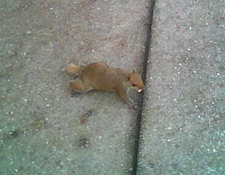 Squir11_1