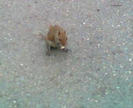 Squir2_3