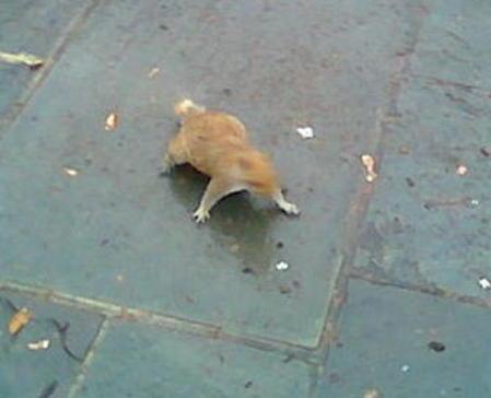 Squir3_2